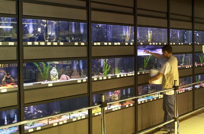 Franchise animaux choisir sa franchise for Animalerie poisson